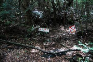 aokigahara-suicide-forest-japan-2
