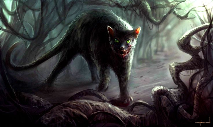 Photo of Der Fluch der schwarzen Katze – Halloween Creepypasta